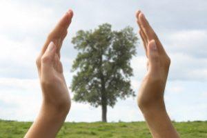 hands_tree_300x200